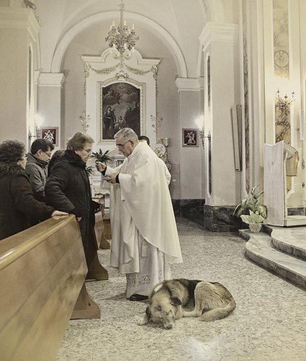 dog-mass3
