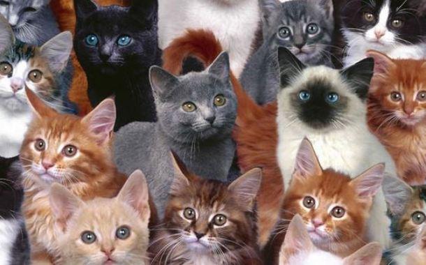 fa660e3d361f Επιδημία για τις γάτες στην Θεσσαλονίκη - INLIFE by INPAOK