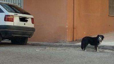 Σκυλίτσα - Χάτσικο στο Αίγιο! (pic)