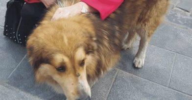 Κακοποιήθηκε ο σκύλος μασκότ των Λαδάδικων