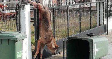 Λύκος εγκλωβίστηκε σε σπίτι σε χωριό της Θεσσαλονίκης