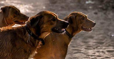 Θεσσαλονίκη: Τρία 300άρια για βόλτα σκύλου χωρίς λουρί