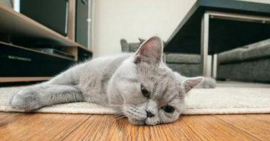 Κορονοϊός: Γάτος βρέθηκε θετικός στο Βέλγιο