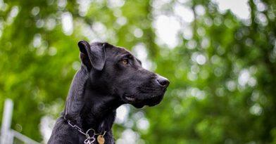 Θεσσαλονίκη: Ληστεία με την απειλή… μεγαλόσωμου σκύλου!
