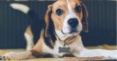 Μύθος ότι κάθε σκυλο-έτος ισοδυναμεί με επτά ανθρώπινα