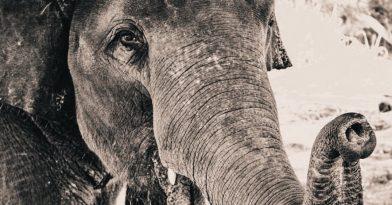 Στον Πηνειό ζούσαν κάποτε ελέφαντες, ιπποπόταμοι και ρινόκεροι