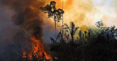 Κλιματική αλλαγή: Τα δύο τρίτα των τροπικών δασών έχουν καταστραφεί